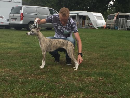 whippet%20rossi%20stand1.jpg
